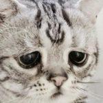 Вечно грустная кошка Луху набирает популярность в интернете