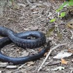 Видео схватки белки со змеей набирает популярность в сети