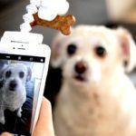 В интернете запустили соцсеть для животных